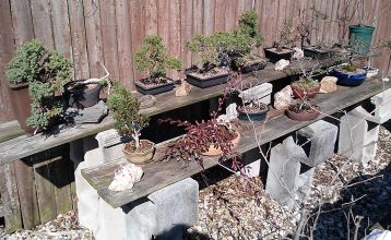 The Bonsai are Up!